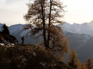 Silhouette of man by tree in front of snowy mountains