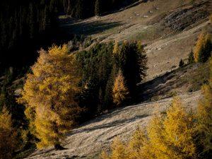 Autumn trees on mountainside