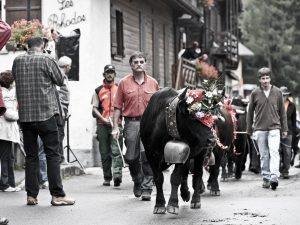 Cow dress up for festival