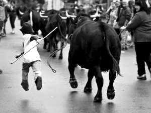 Boy running with cows down street