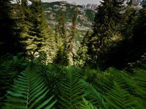 View of ferns on the mountainside
