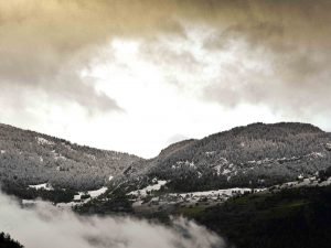 New snow on the pines on the mountainside