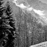 Snowy trees in front of misty mountains
