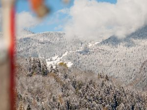 Snow covered trees on the mountainside